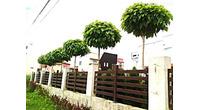 Prodaja sadnica i tepih trave